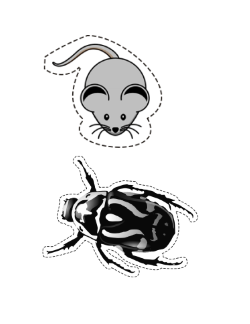 A mouse and bug